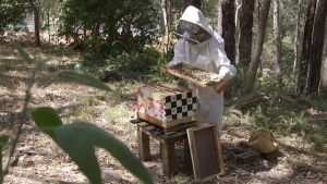 ninas bees apiary in the blue mountains